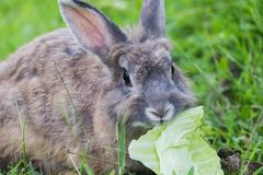 Conejo del bebé en hierba fotografía de archivo