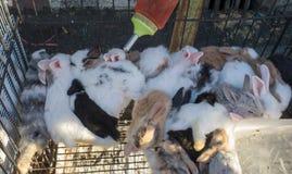 Conejo del bebé en la feria urbana de Tailandia Imagen de archivo libre de regalías