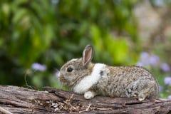 Conejo del bebé en un tronco Imagen de archivo libre de regalías