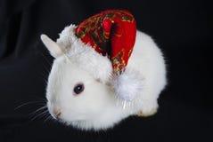 Conejo del blanco de la Navidad Imágenes de archivo libres de regalías