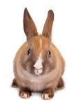 Conejo del recorte fotos de archivo libres de regalías
