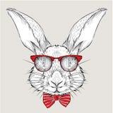 Conejo del retrato de la imagen en el pañuelo y con los vidrios Tienda extrema del deporte Fotografía de archivo