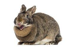 Conejo divertido (4 años) fotografía de archivo libre de regalías
