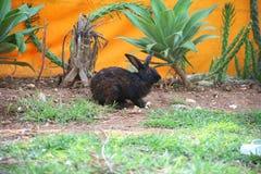 Conejo dulce foto de archivo libre de regalías