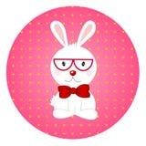 Conejo en círculo rosado Fotografía de archivo libre de regalías