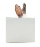 Conejo en caja Fotos de archivo