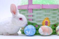 Conejo en cesta foto de archivo libre de regalías