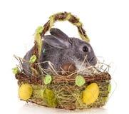 Conejo en cesta en el fondo blanco fotos de archivo
