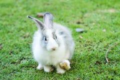 Conejo en el chiangmai Tailandia del nightsafari Fotos de archivo
