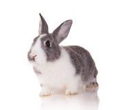 Conejo en el fondo blanco fotografía de archivo