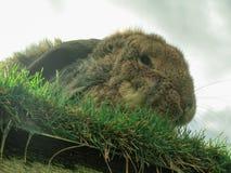 Conejo en el tejado imágenes de archivo libres de regalías