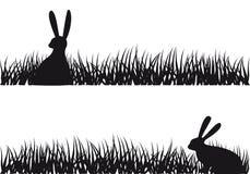 Conejo en hierba,