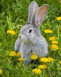 Conejo en hierba Foto de archivo libre de regalías