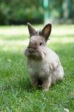 Conejo en hierba Imagen de archivo libre de regalías