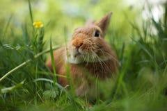 Conejo en hierba verde Fotos de archivo libres de regalías