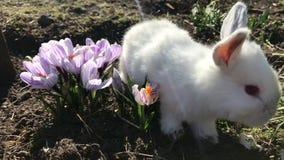 Conejo en hierba verde, conejo blanco poco conejo, pequeño conejito blanco metrajes