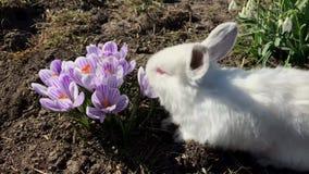 Conejo en hierba verde, conejo blanco poco conejo, peque?o conejito blanco almacen de metraje de vídeo