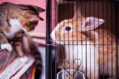 Conejo en jaula Imagen de archivo libre de regalías