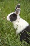 Conejo en la hierba Foto de archivo libre de regalías