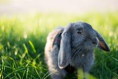 Conejo en la hierba Fotografía de archivo libre de regalías