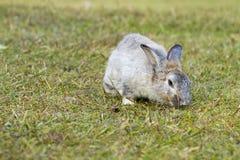 Conejo en la hierba verde Fotos de archivo libres de regalías