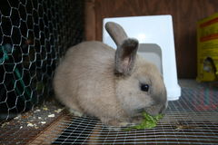 Conejo en la jaula 3 Imágenes de archivo libres de regalías