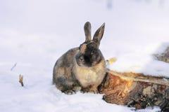 Conejo en la nieve en el bosque imagen de archivo libre de regalías