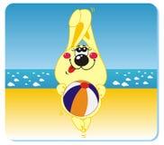 Conejo en la playa Foto de archivo