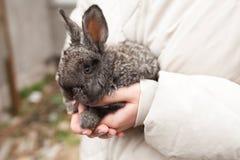 Conejo en las manos en granja Imagen de archivo libre de regalías