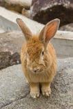 Conejo en las rocas de piedra Imagenes de archivo
