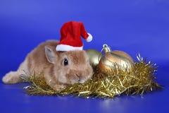 Conejo en los alrededores del Año Nuevo Imágenes de archivo libres de regalías