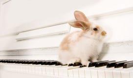 Conejo en los claves del piano Fotos de archivo libres de regalías