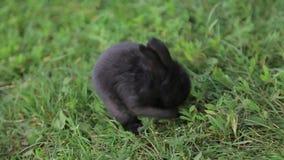 Conejo en manos metrajes