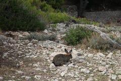 Conejo en montañas Fotos de archivo