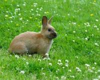 Conejo en prado Foto de archivo libre de regalías