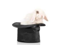 Conejo en sombrero negro Imagenes de archivo