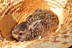 Conejo en un sombrero Fotos de archivo libres de regalías