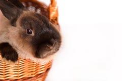 Conejo en una cesta Imágenes de archivo libres de regalías