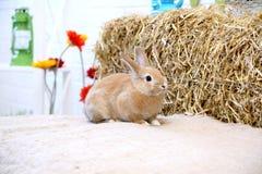 Conejo en una pila del heno con las flores Imagen de archivo