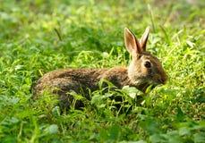Conejo en verde Imágenes de archivo libres de regalías