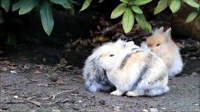 Conejo enano afuera en naturaleza almacen de metraje de vídeo