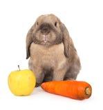 Conejo enano con las zanahorias y la manzana. Imagen de archivo