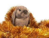 Conejo enano en el oropel de la Navidad. Foto de archivo libre de regalías
