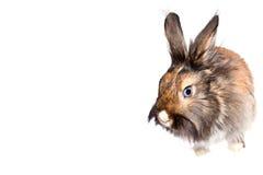 Conejo feliz Fotografía de archivo