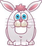 Conejo gordo Imagen de archivo libre de regalías