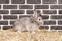 Conejo gris cerca de una pared de ladrillo Fotografía de archivo