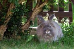 Conejo gris decorativo Imagen de archivo libre de regalías