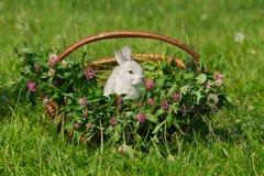 Conejo gris que se sienta en la cesta Imagen de archivo
