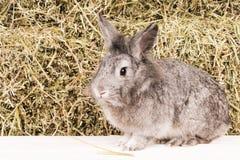 Conejo hermoso cerca del heno Imágenes de archivo libres de regalías