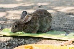 Conejo joven que come las hojas en el jardín Foto de archivo